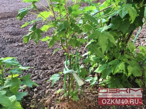 Как правильно сделать опоры для кустов смородины