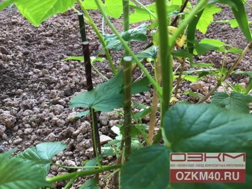 Композитные колышки, опоры для кустов смородины